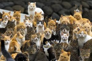 Aoshima Island, Pulau Di Jepang Yang Dikuasai Kucing