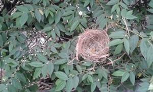 Sarang Burung Di Tengah Kota Jakarta