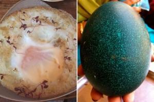 Restoran Ini Sajikan Telur Burung Unta