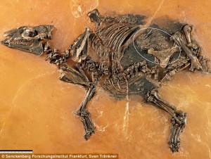 Ditemukan Fosil Janin Kuda Berusia 48 Juta Tahun