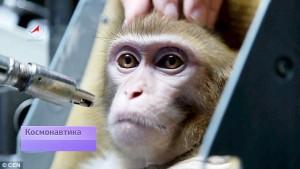 Rusia Persiapkan 4 Ekor Monyet Untuk Pergi Ke Mars