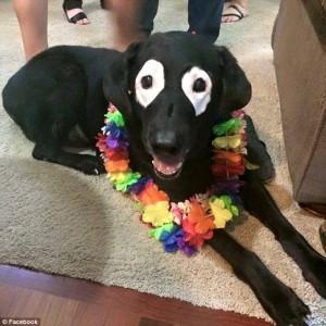 Menderita Vitiligo, Bulu Anjing Ini Berubah Warna