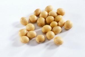 Diet Tinggi Kedelai, Lindungi Wanita Dari Osteoporosis