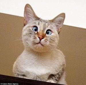 Dibuang Karena Bermata Juling, Kucing Ini Kini Jadi Idola