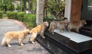Antri Bersihkan Kaki, 4 Anjing Ini Berbaris Dengan Sabar