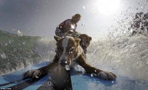 Juara Dunia Surfer Ajak Dua Anjingnya Berselancar