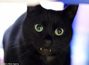 Rory, Kucing Hitam Dengan Gigi Drakula