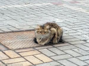 Ditinggal Pemiliknya, Kucing Ini Duduk Di Tempat Yang Sama Selama Setahun