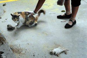 Kucing Ini Berusaha Hidupkan Anak-anaknya Yang Mati