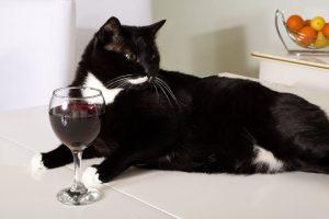 Apollo Peak Hadirkan Wine Untuk Kucing