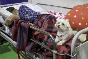 Terbaring Di Penampungan Setelah Gempa Italia, Kakek Ini Ditemani Anjing Setia