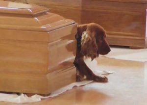 Memilukan, Anjing Ini Berbaring Di Samping Peti Mati Pemiliknya Setelah Gempa Italia