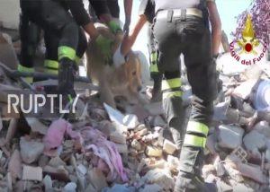 Anjing Diselamatkan Setelah Terkubur 9 Hari Di Reruntuhan Gempa Italia