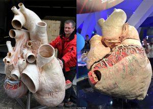 Jantung Paus Biru Seberat 270 Kg Dipamerkan Di Kanada