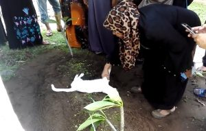 Heboh Datang Ke Pemakaman, Seekor Kucing Putih, Menolak Meninggalkan Kuburan