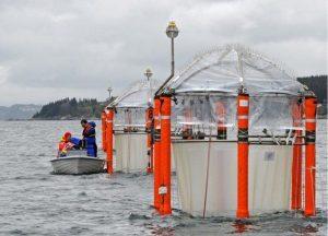 Studi: Emisi CO2 Hancurkan Kehidupan Di Laut