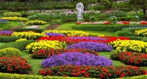 Kamu Harus Tahu, Makna Mengejutkan Di Balik 7 Bunga Cantik Ini