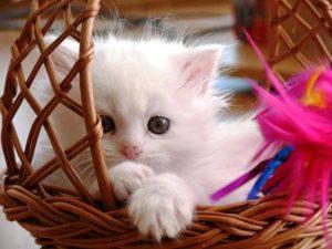 Lima Penyakit Yang Disebabkan Oleh Kucing