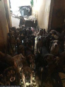 Pemadam Kebakaran Temukan 85 Ekor Anjing Berdesakan Di Sebuah Rumah