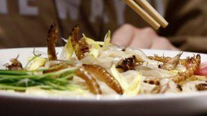 Serangga Akan Menjadi Menu Makanan Di Eropa