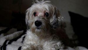 Anjing Ini Menolak Tinggalkan Mayat Pemiliknya Selama Berminggu-minggu