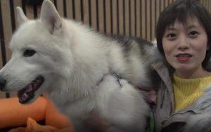 Bisnis Hotel Mewah Untuk Anjing Berkembang Di China