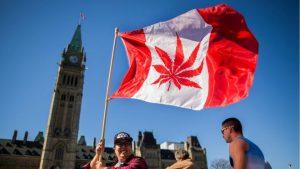 Kanada Melegalkan Penggunaan Ganja Untuk Rekreasi