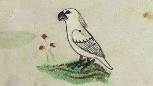 Peneliti Temukan Ilustrasi Kakatua Tertua Dalam Buku Eropa Abad Ke-13