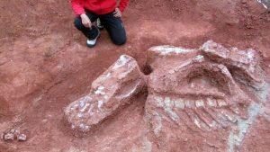 Ilmuwan Temukan Fosil Dinosaurus Raksasa Pertama