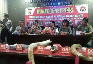 Kementerian LHK Dan Kepolisian Berhasil Mengungkap Kasus Pembunuhan Gajah Sumatera