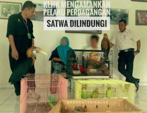 Kementerian LHK Tangkap Pelaku Perdagangan Satwa Dilindungi Di Manado