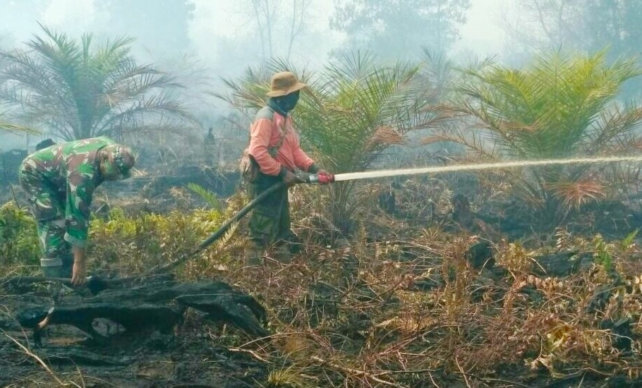 Kebakaran Hutan Di Dumai Dan Singkawang Berhasil Dipadamkan