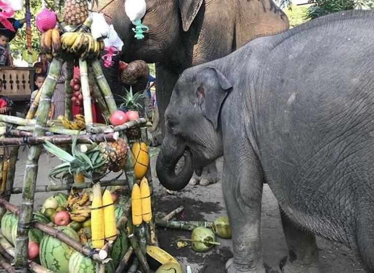 Intan, Gajah Yang Berbahagia Di Hari Bakti Rimbawan