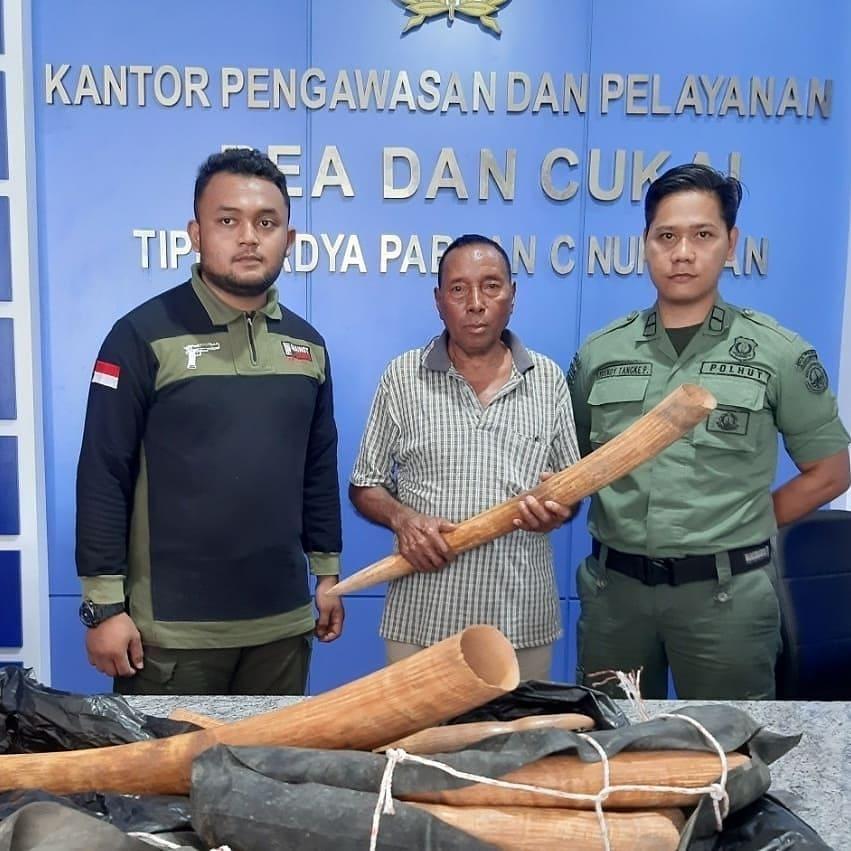 Gakkum KLHK Gagalkan Penyelundupan 10 Potong Gading Gajah Dari Malaysia