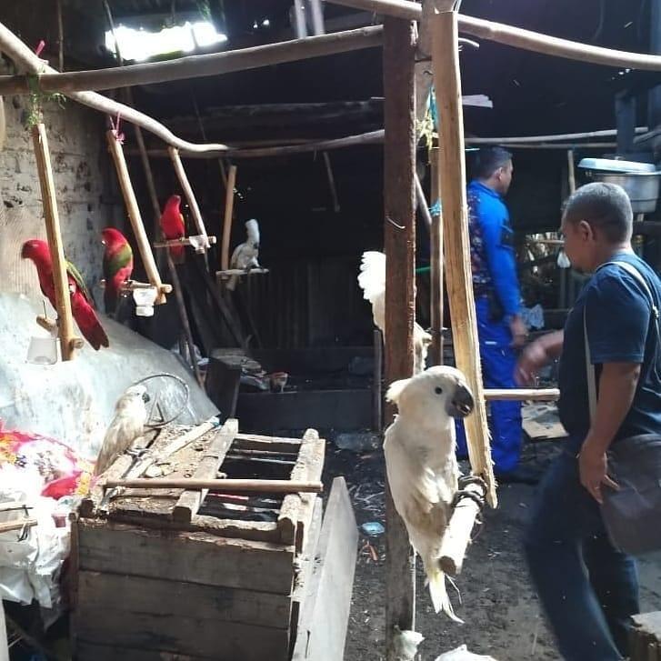 KLHK mengamankan 85 Ekor Satwa Dilindungi Di Maluku Utara