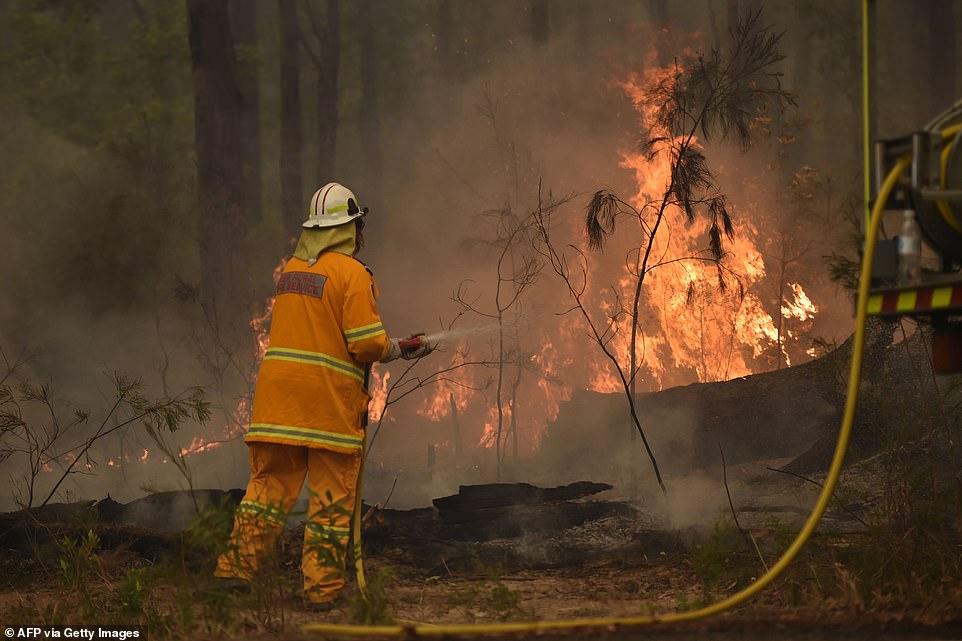 500 Ribu Hewan Termasuk 8 Ribu Kuala Mati Dalam Kebakaran Hutan Di Australia