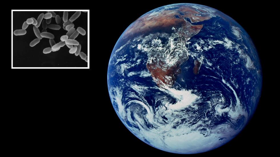 Ilmuwan Berhasil Menumbuhkan Organisme Purba Yang Bisa Menjadi Asal Mula Kehidupan Di Bumi