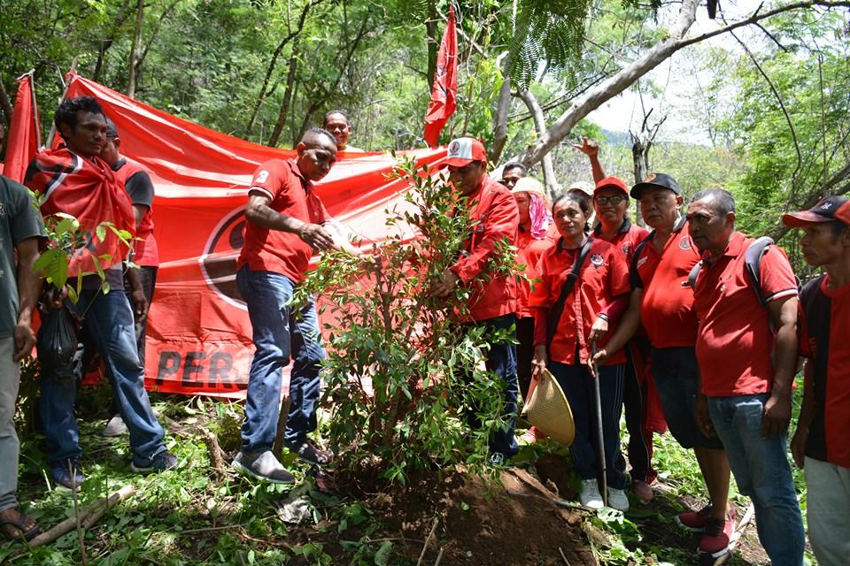 """Cinta Bumi"" DPC PDIP Flotim Tanam 1000 Anakan Pohon Di Kawasan Hutan Gunung (Ile) Mandiri"